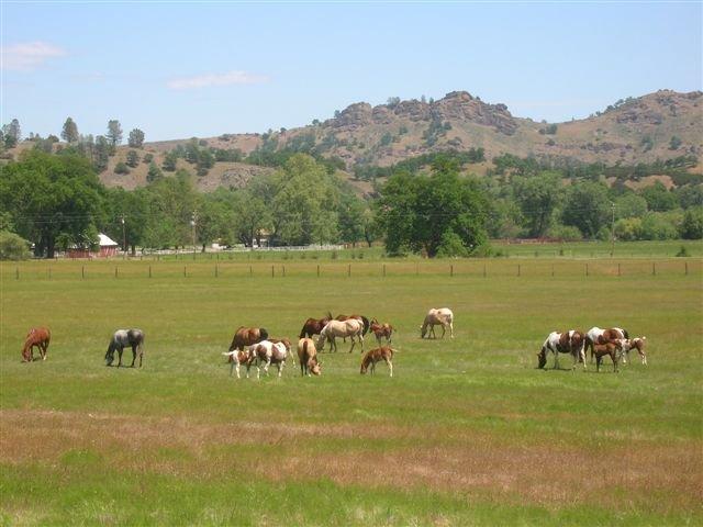 http://www.stonyfordranch.com/images/Horses-field2006.jpg